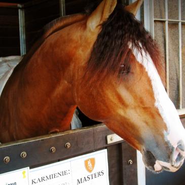 Idealny przepis na pasze dla koni