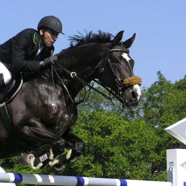 Osiągnij sukces ze sportową paszą dla koni