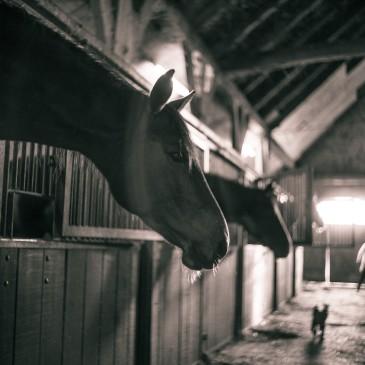 Pasza dla koni kaszlących, z RAO lub alergią