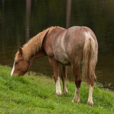 Roztrenuj swoje konie z paszą dla koni Masters!