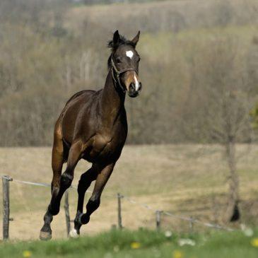 Pasze dla koni: włókno