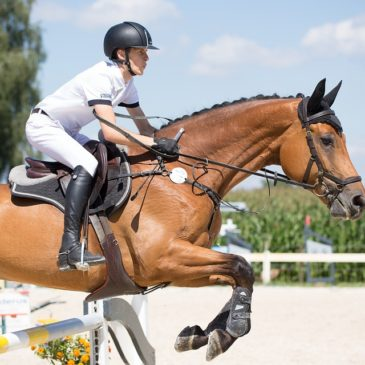 Jak dobrać właściwy czaprak razem z Masters Polska pasza dla koni?