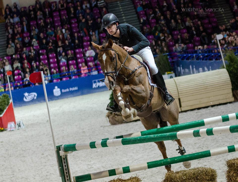 pasze sportowe dla koni