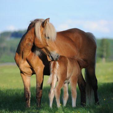 Fragment Ebooka wydanego przez Masters Polska pasza dla koni