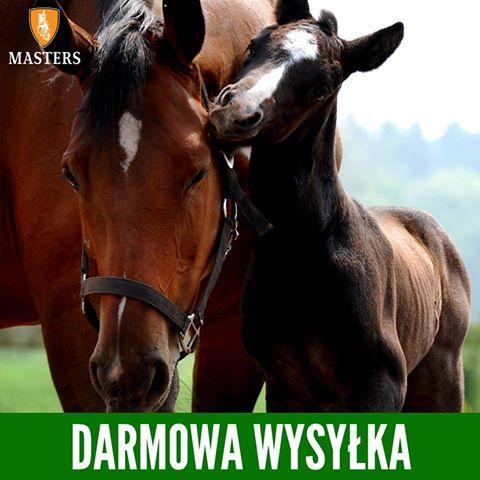 Masters polska pasza dla koni