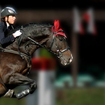 Orkisz – pasze Masters przejmują opiekę nad legendarnym koniem!