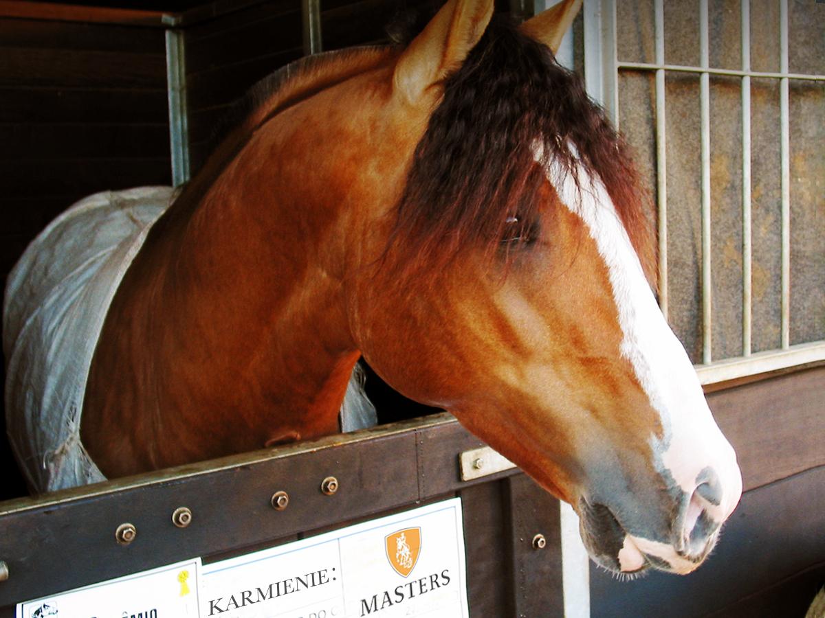 idealna pasza dla koni