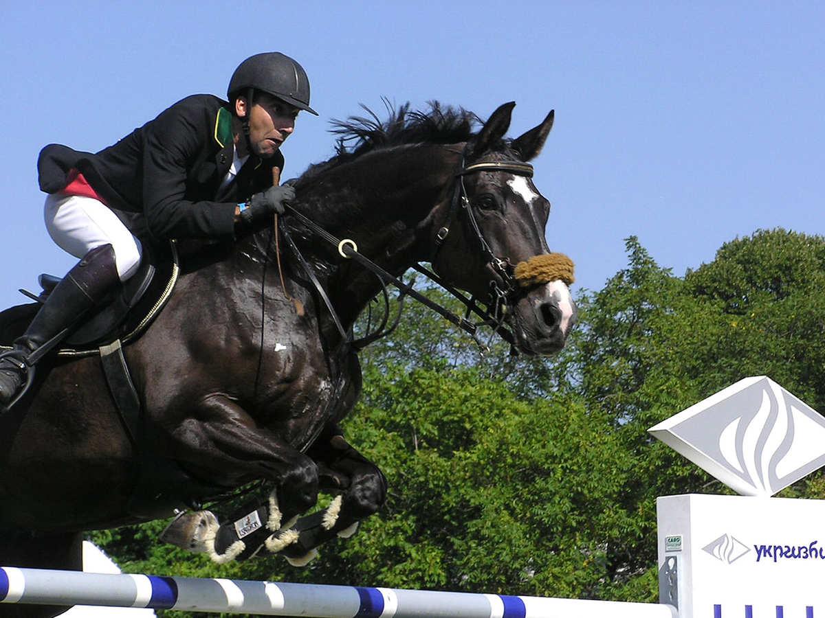 pasza dla koni sukces