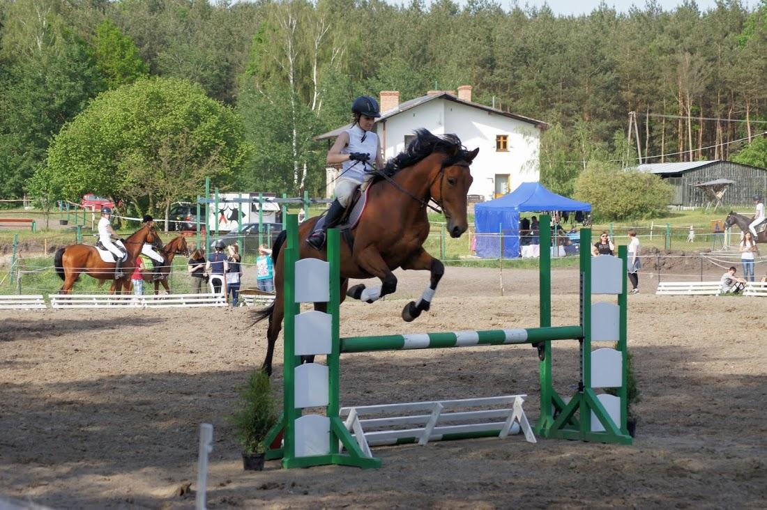 pasza dla koni na zawody