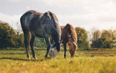 dietetyczna pasza dla koni