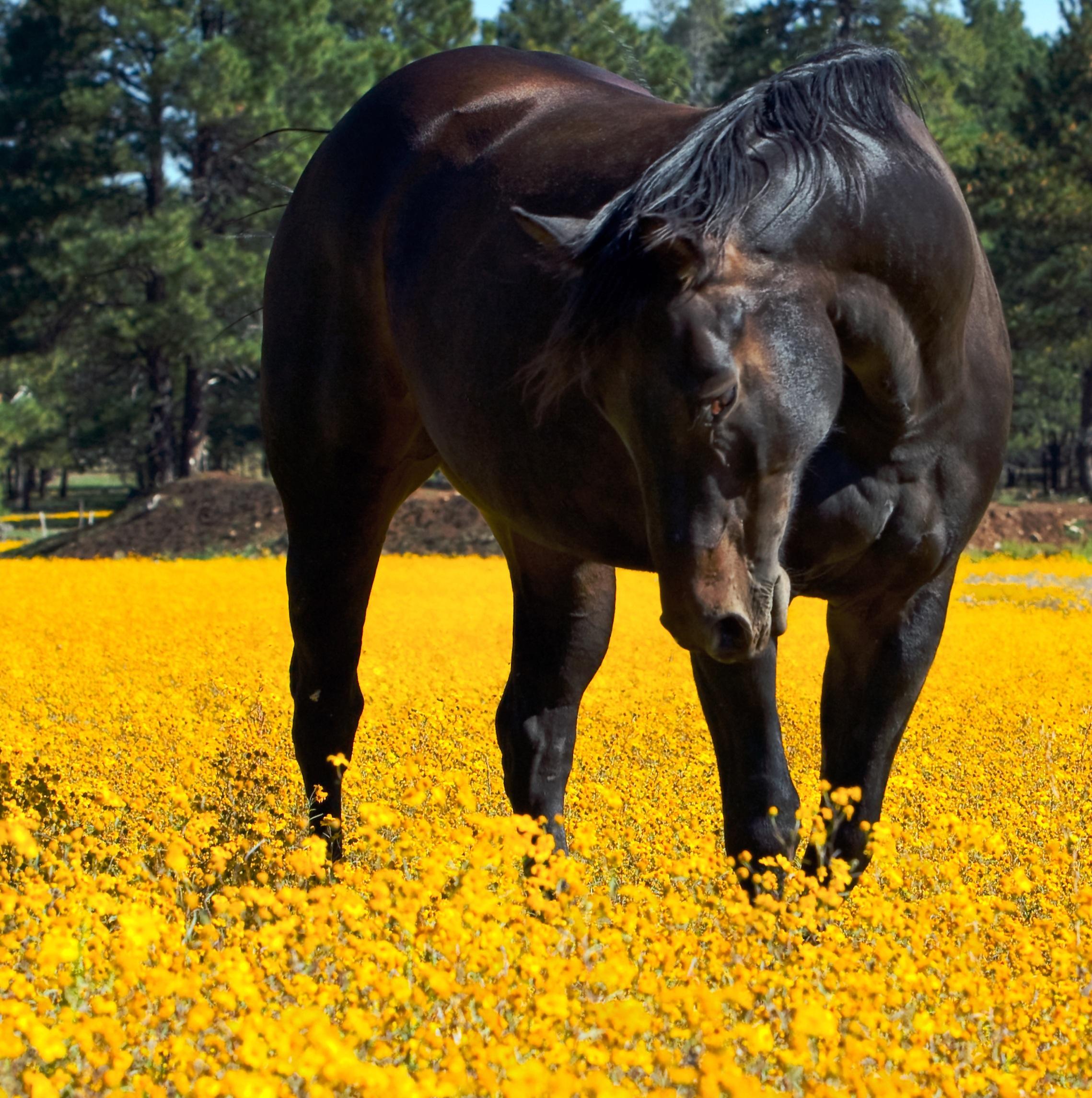 Pasza dla koni rekreacyjnych