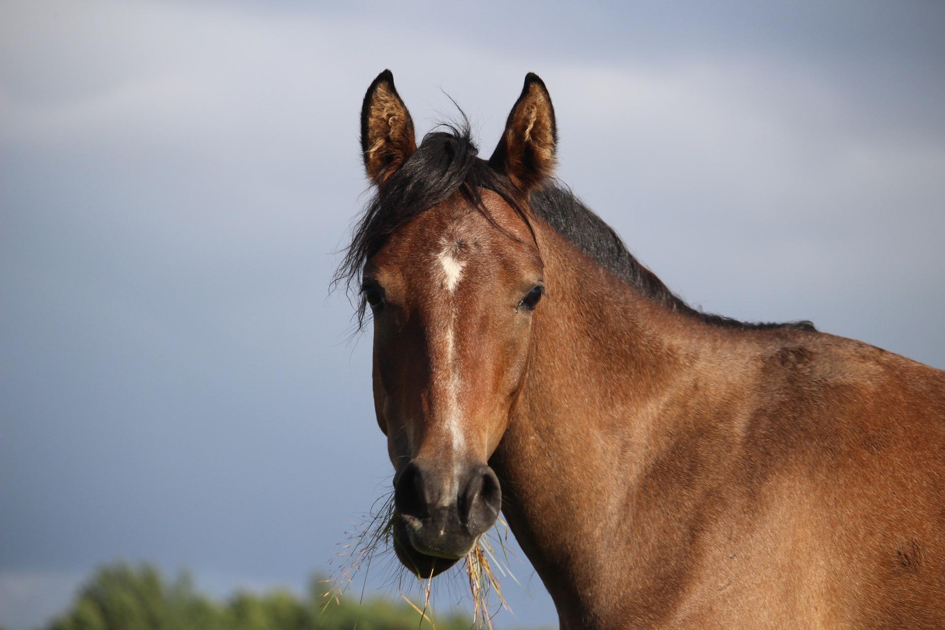 granulat dla koni bez owsa