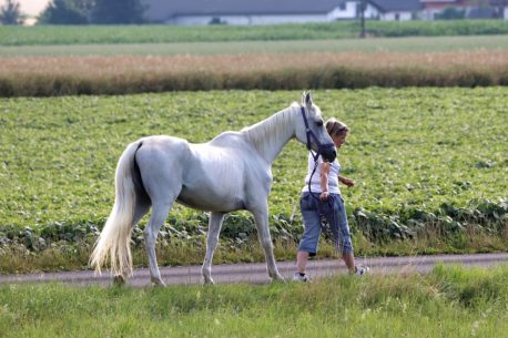 pasza dla konia seniora