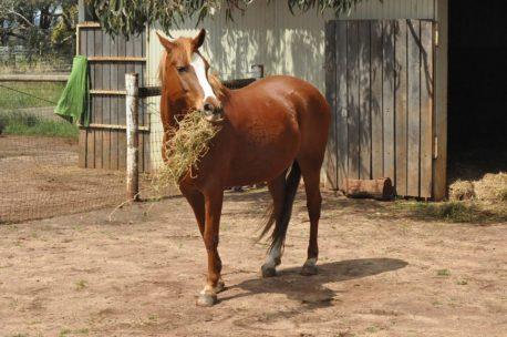 pasza podstawowa dla koni