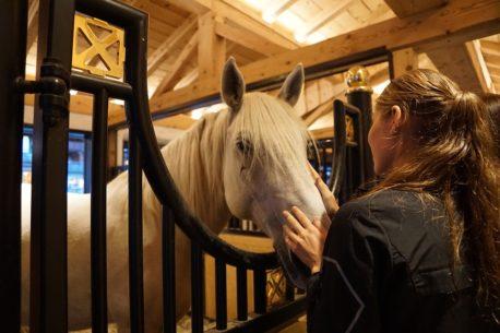 sportowe pasze dla koni