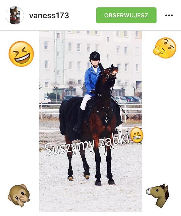musli dla koni