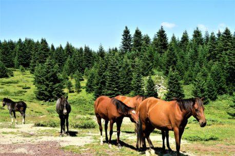 cukierki dla konia