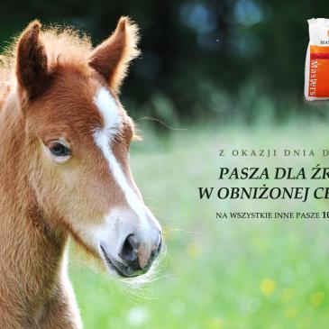 Promocje na Dzień Dziecka z Masters Polska pasza dla koni
