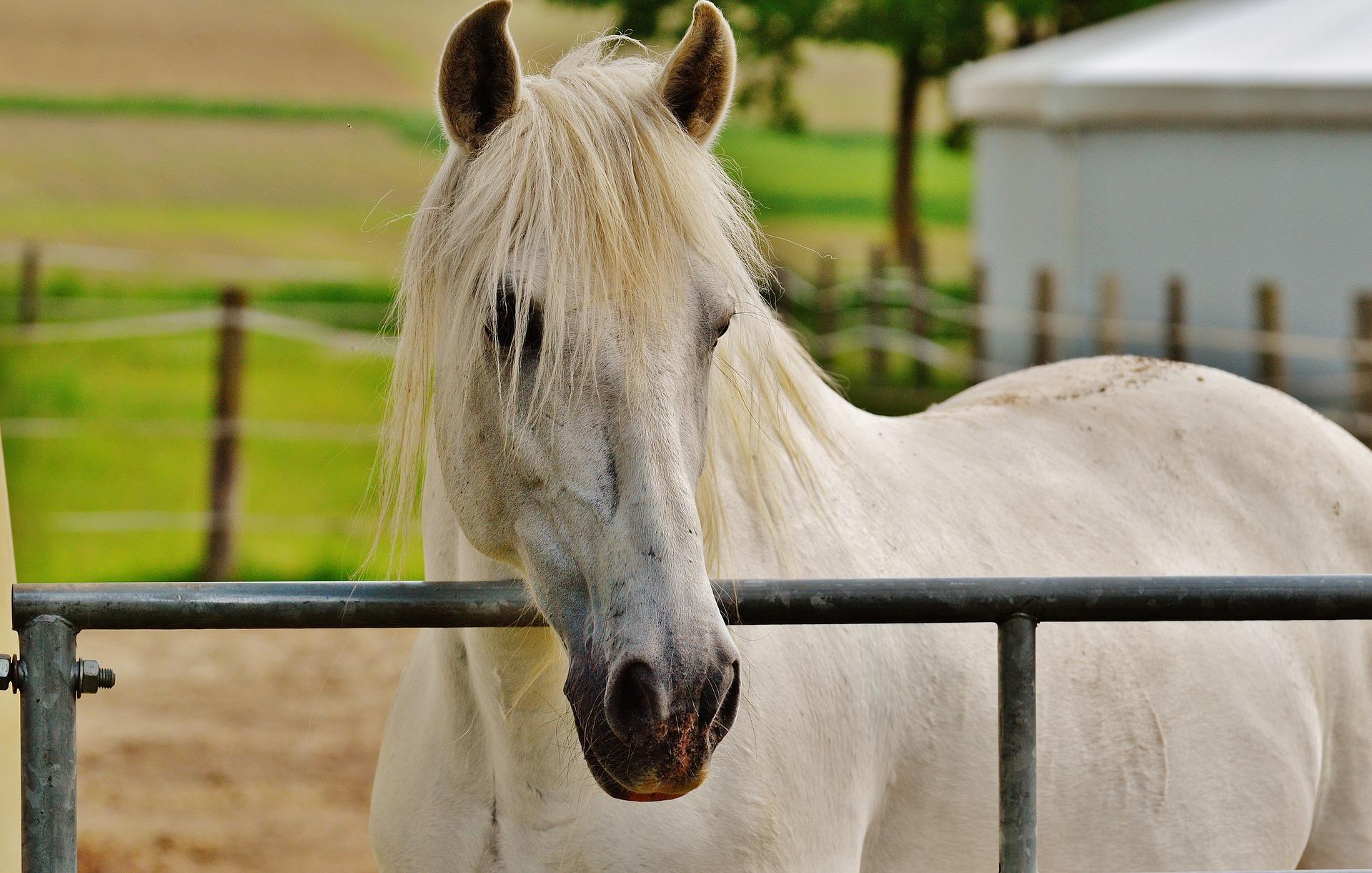 pasza dla konia