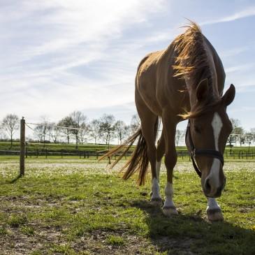 Jak zadbać o konia w trakcie upałów – elektrolity dla koni