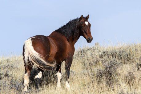 pasza dla nadpobudliwych koni