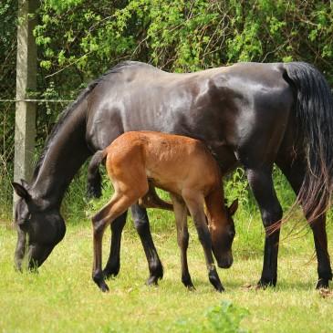 Masters Polska pasza dla koni ratuje zwierzęta z OTOZ Animals