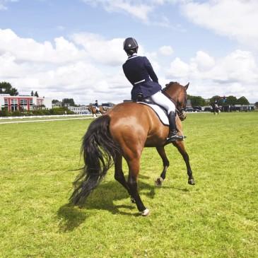 Ciekawostki olimpijskie według Masters Polska pasza dla koni
