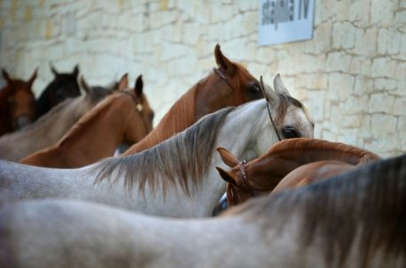 pasza dla koni rekonwalescentów