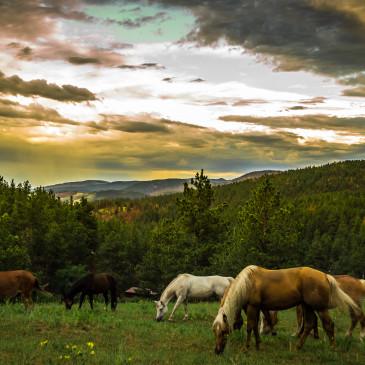 Witaminy dla koni w paszach