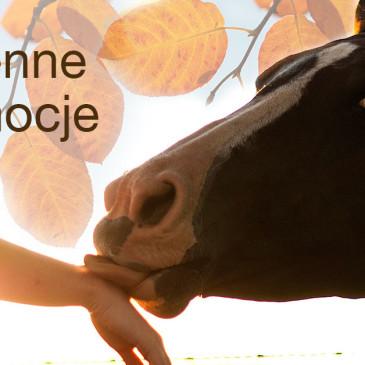 Jesienna promocja paszy dla koni Masters