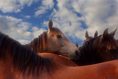 ziołowy mesz dla koni