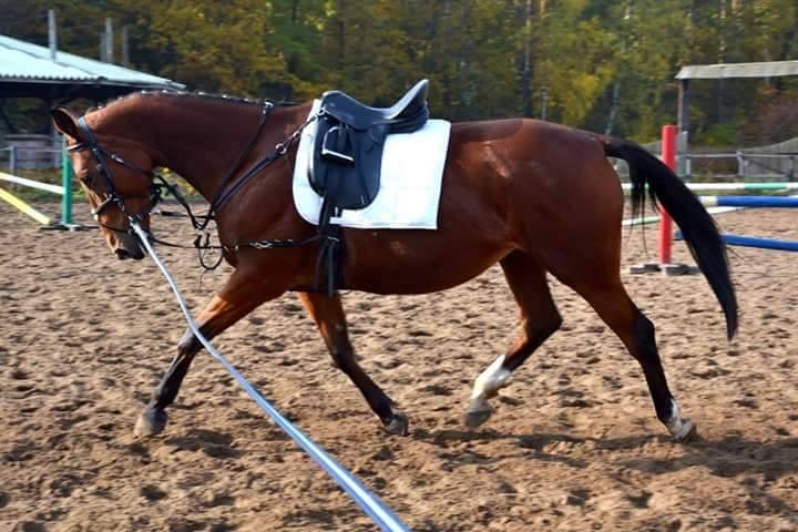 granulat dla koni