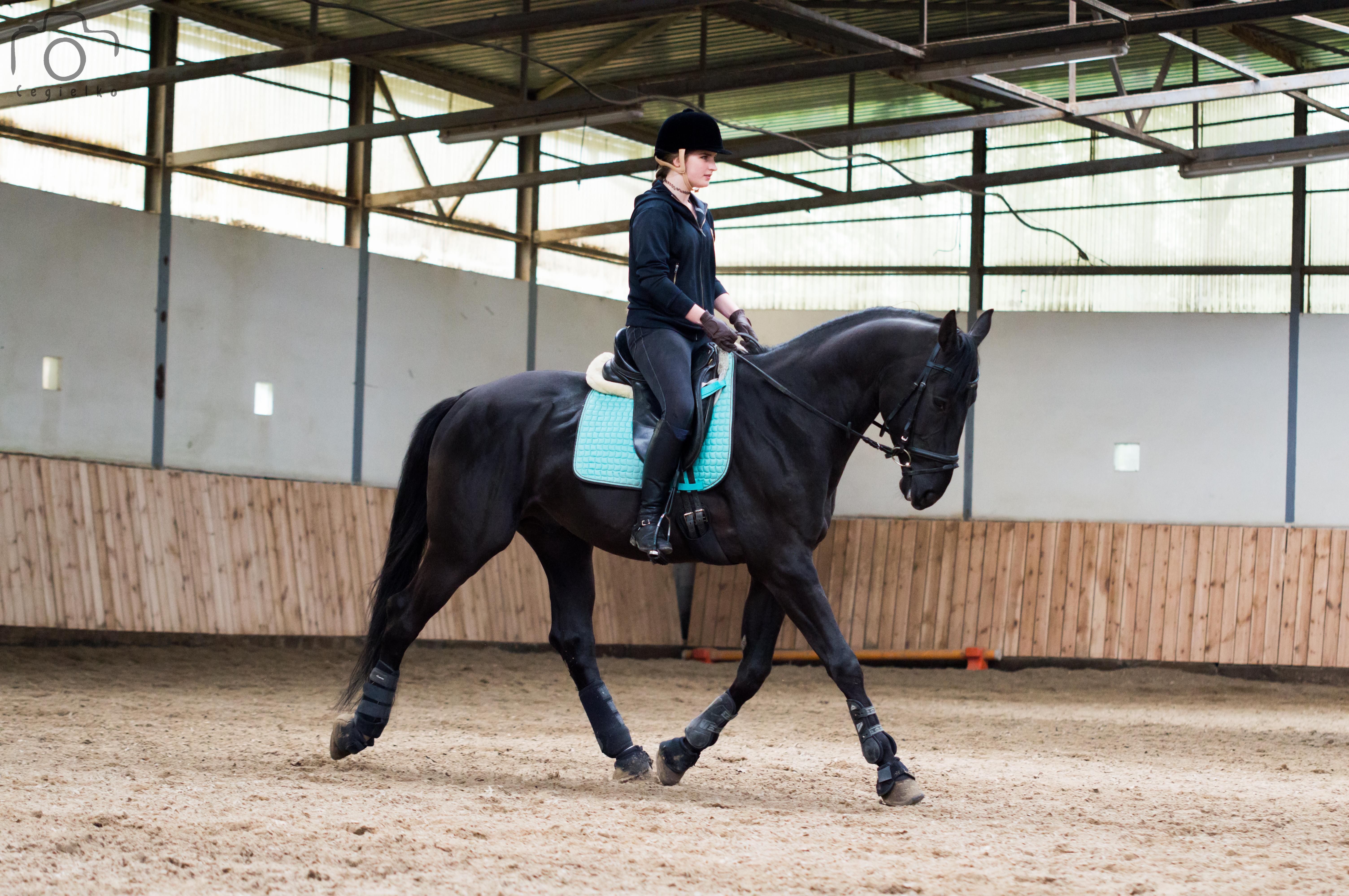pasza dla koni sportowych