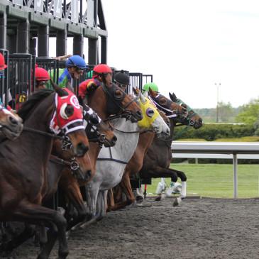 Wielka Warszawska 2016 – jaka pasza dla koni wyścigowych?