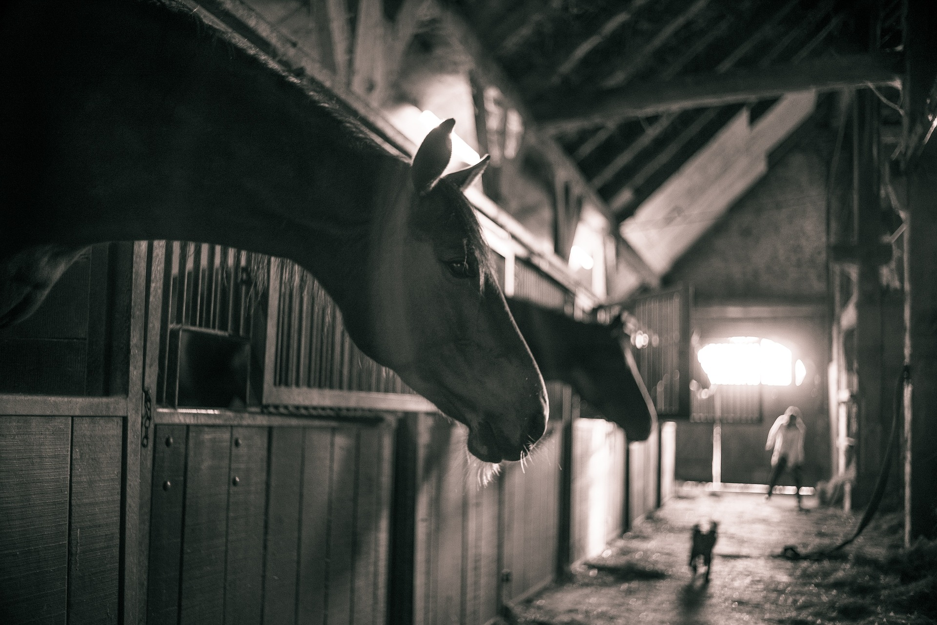 musli dla koni z rao