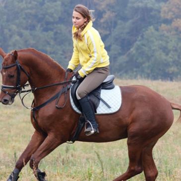 Pasza dla koni na jesień