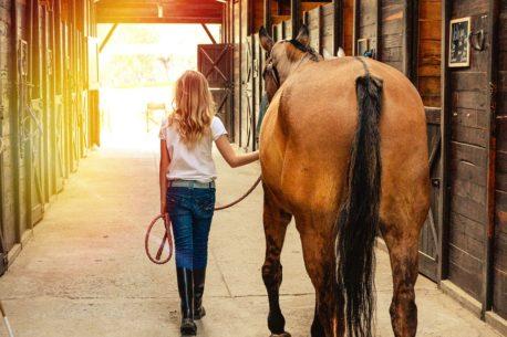 pasza dla koni z RAO
