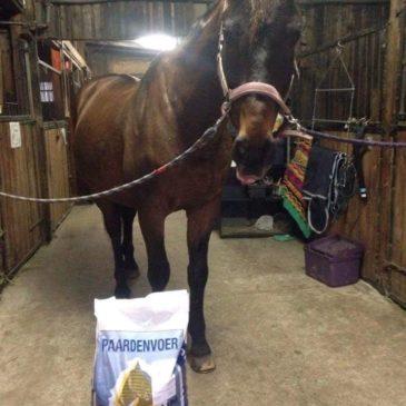 Poznaj Cyklona, a wraz z nim paszę dla koni Masters!