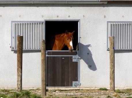 dodatki do paszy dla koni
