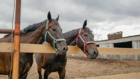 pasza dla koni niejadków
