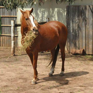 Musli Profit – pasza Masters, którą uwielbia każdy koń!