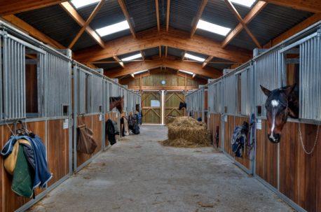 składniki paszy dla koni