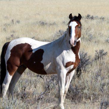 Vademecum składników paszy dla koni