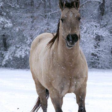 Żywienie koni zimą