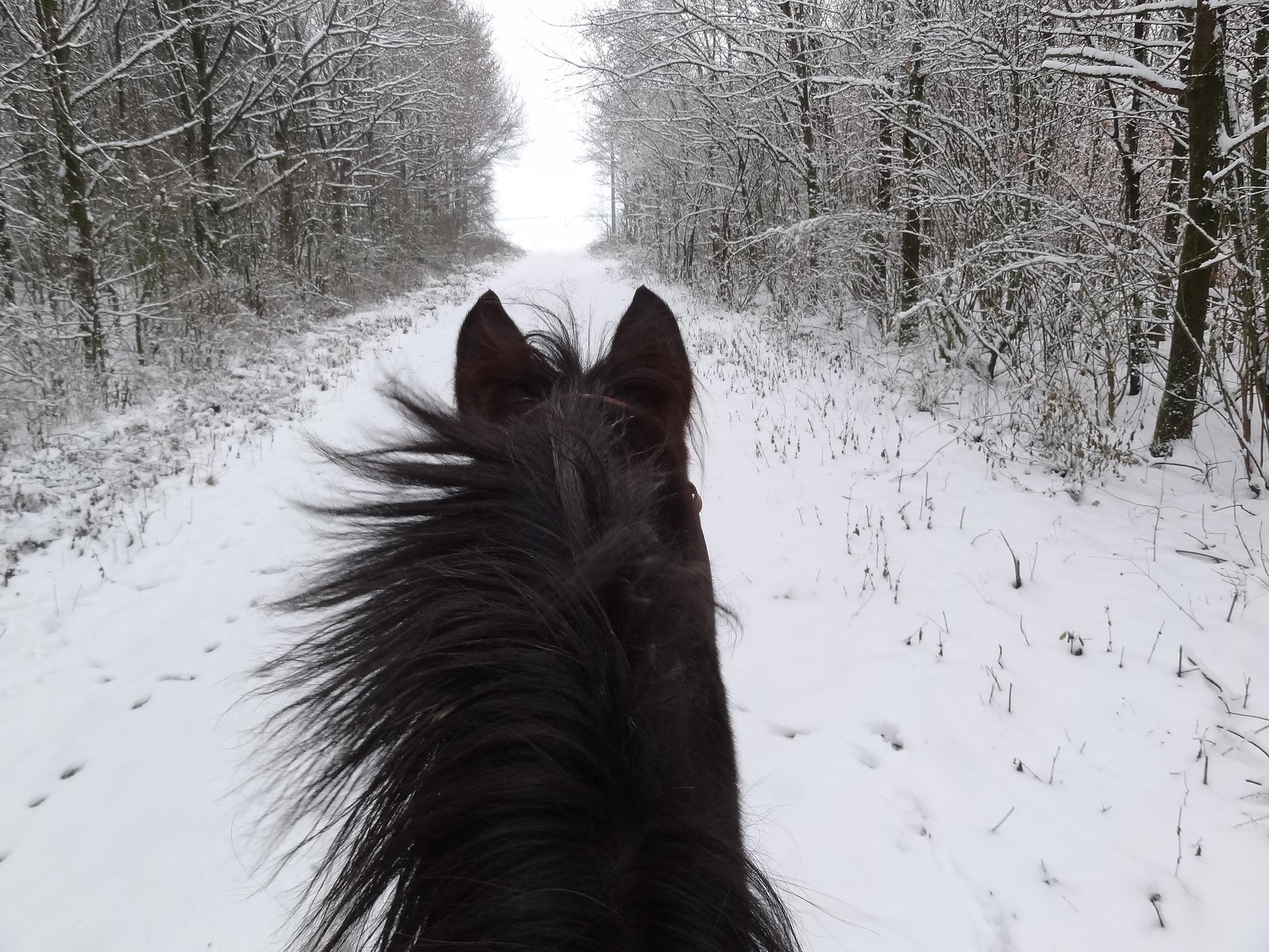 promocja pasza dla koni