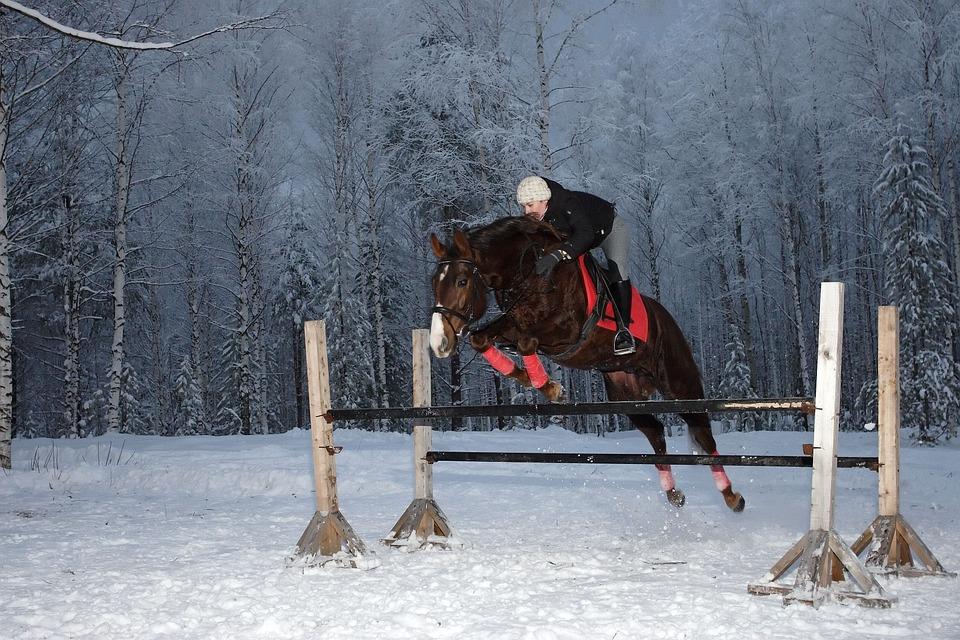 probiotyki dla konia