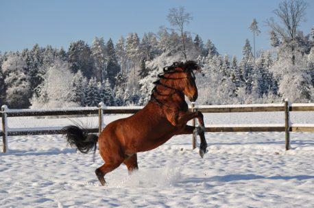 pasza dla koni na zimę