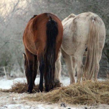 Popraw odporność swojego konia z Masters pasza dla koni!