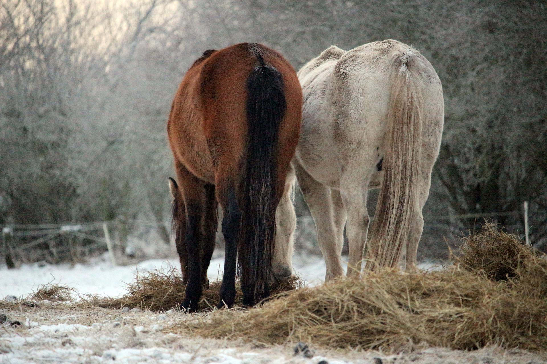 pasza masters dla koni