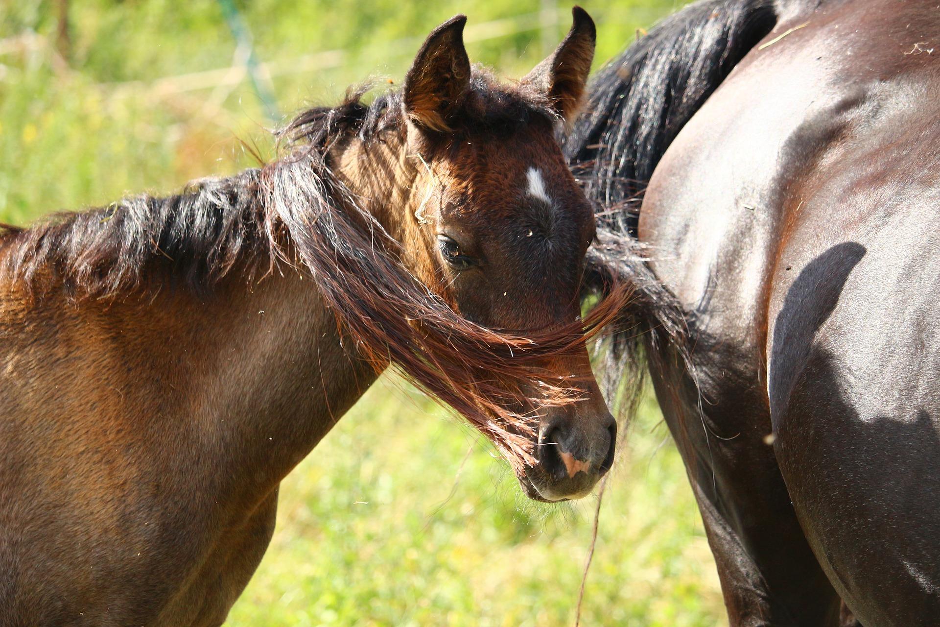 pasza dla koni